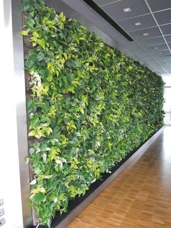 Wandbegrünung wandbegrünung grün und raum raumbegrünung pflanzenpflege