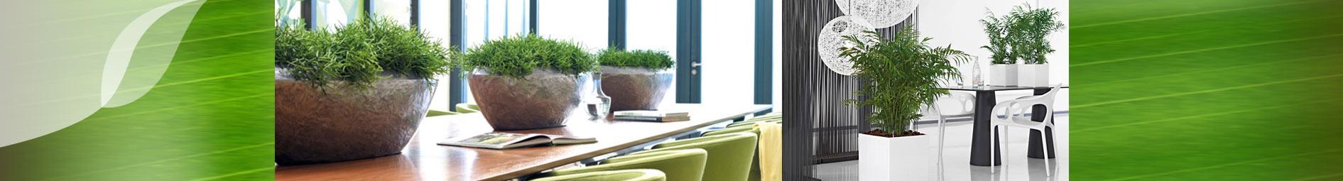 Hydrokultur gr n und raum raumbegr nung pflanzenpflege for Hydrokultur design
