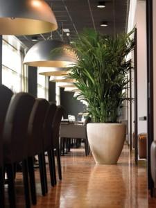 Gruen und Raum Hydropflanzen