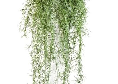 Gruen und Raum Kunsthängepflanzen
