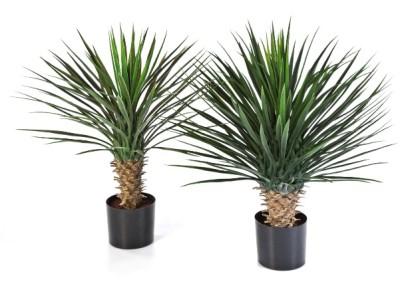 Gruen und Raum Kunst / Textilpflanzen Yucca Rostrata