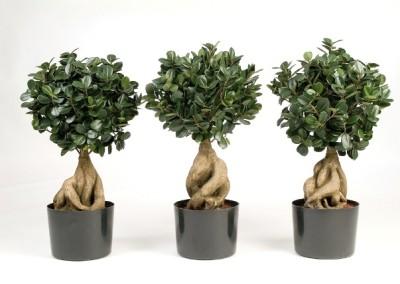 Gruen und Raum Kunst / Textilpflanzen Ficus