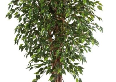 Gruen und Raum Kunst und Textilpflanzen Ficus