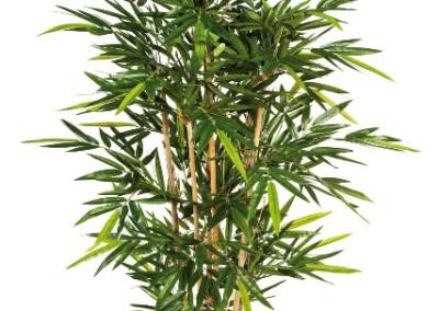 Gruen und Raum Kunst und Textilpflanzen Bambus