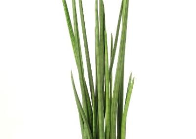 Gruen und Raum Kunstpflanzen / Textilpflanzen Baton Plant