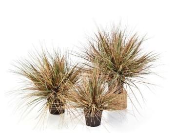 Gruen und Raum Kunstpflanzen / Textilpflanzen Gras