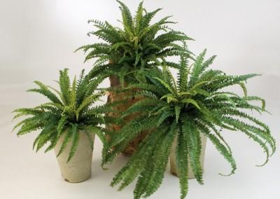 Gruen und Raum Kunstpflanzen / Textilpflanzen Farn