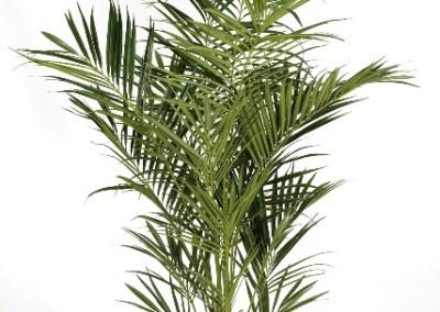 Gruen und Raum Kunstpflanzen / Textilpflanzen Palme