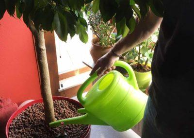 pflanzenpflege-richtig-giesen