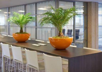 Tischgefäß Cascara Plus bepflanzt mit Phönix-Palme