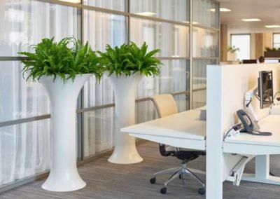Grün und Raum Vase Chapeau Spain bepflanzt mit Farn