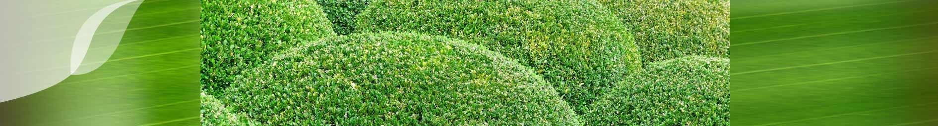pflanzenpflege außenbereich grün und raum